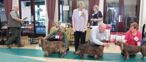 2010 Sussex Spaniel Champ Show Results